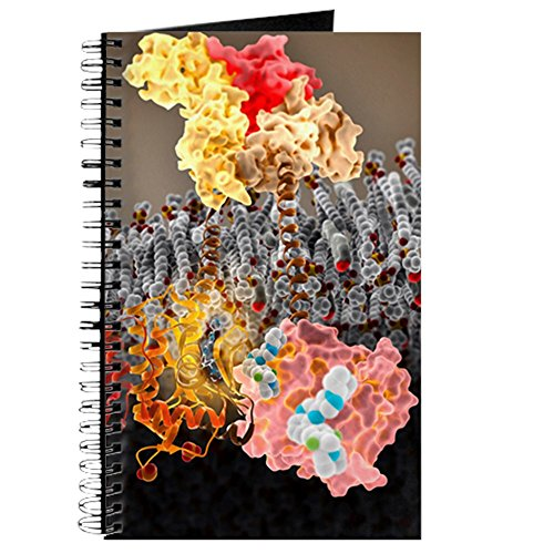 (CafePress - Growth Hormone Receptor, Molecular Model - Spiral Bound Journal Notebook, Personal Diary, Dot Grid )