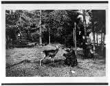 "Photography Poster - [Man feeding a deer at the National Zoo, Washington, D.C.], Gloss finish, 24""x19"""