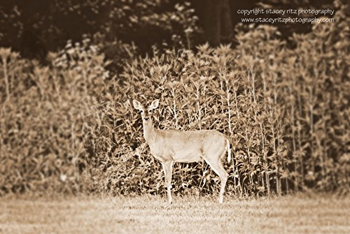 "Wall Decor - ""Black and White Deer"" - Wildlife Photography - Deer - Homemade"