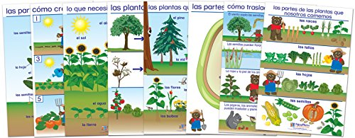 About Bulletin Board Set - NewPath Learning 94-0321 All About Plants Bulletin Board Chart Set, Spanish Edition (Pack of 8)