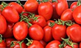 amish paste tomato - Organic Amish Paste Tomato Seeds - 2 SEED PACKETS! - Over 100 Heirloom Non-GMO USDA Organic Seeds