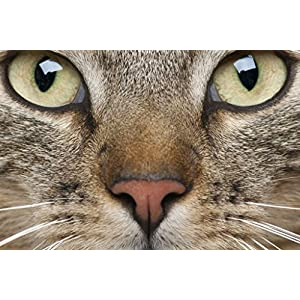 Sim,Environmentally Friendly Wood Materials,a Good Puzzle for Jigsaw Puzzle Player 1000 Piece 29.5 X 19.6 inch in Box Present-Wrap : Animal Whiskers Eyes Muzzle Cat