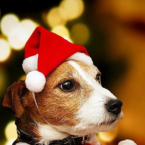 Amazon.com: Weite - Gorro de Navidad para mascotas con ...