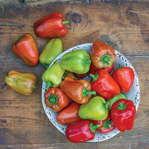Burpee Sweet Confetti' Hybrid Tasty Red Pepper, 3 Live Plants | 2 1/2