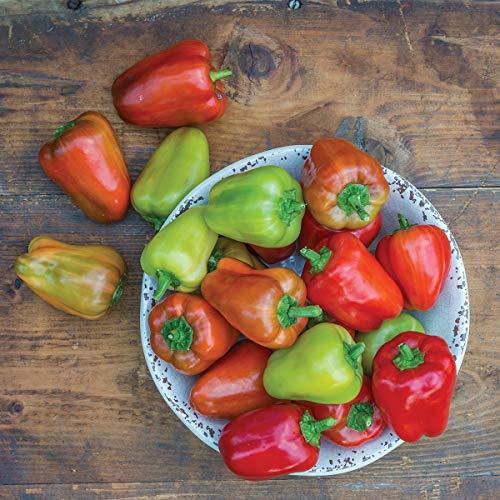 (Burpee Sweet Confetti' Hybrid Tasty Red Pepper, 3 Live Plants | 2 1/2