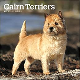 amazon cairn terriers 2019 calendar browntrout publishers breeds