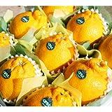 【 熊本県産 】 高級 デコポン 化粧箱入り 熊本が誇る至極の柑橘、本物のデコポン!! (中 ( 9玉 2.6kg前後 ))