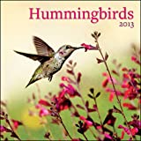 Perfect Timing Avalanche 2013 Humming Birds Wall Calendar (7001532)