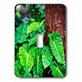 3dRose Danita Delimont - Nature - USA, Hawaii, Oahu, Lush green philodendrons Growing in the forest - Light Switch Covers - single toggle switch (lsp_278964_1)