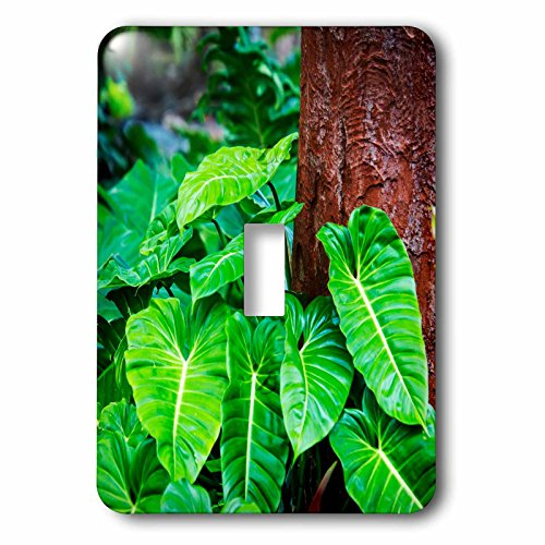 3dRose Danita Delimont - Nature - USA, Hawaii, Oahu, Lush green philodendrons Growing in the forest - Light Switch Covers - single toggle switch (lsp_278964_1) by 3dRose