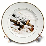 3dRose Alexis Photography - Seasons Winter - Snow covered birch tree logs or firewood on an old snow - 8 inch Porcelain Plate (cp_281200_1)