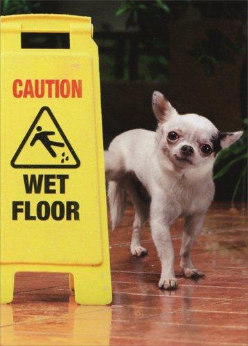 Dog Wet Floor Sign Birthday