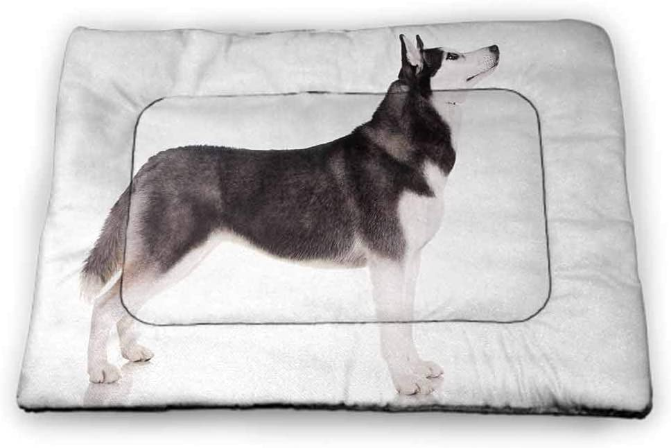 Nomorer Large Pet Mat for Kennel Alaskan Malamute for Food and Water Alaskan Animal Arctic Canine Mammal Obedient Companion Portrait Purebred 35