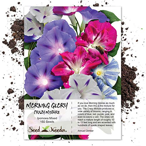 "Seed Needs, Morning Glory""Crazy Mixture"" (Ipomoea Mixture) 150 Seeds"