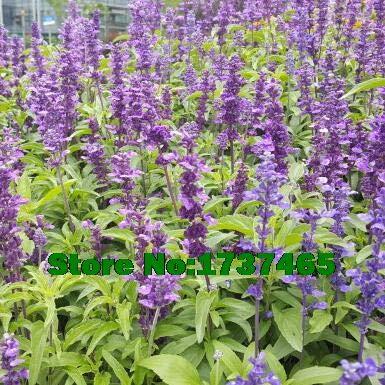 FERRY Semillas germinación Alta no sólo Plantas: 200pcs ...