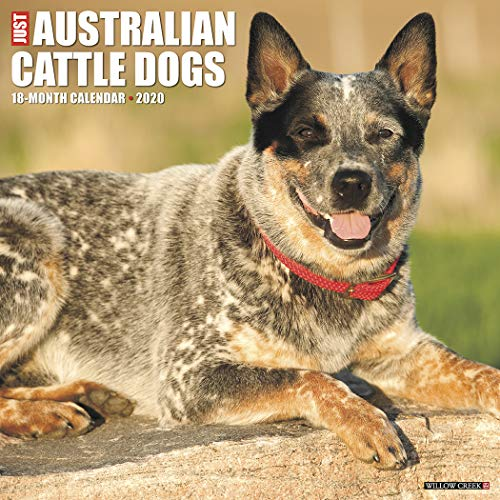 Just Australian Cattle Dogs 2020 Wall Calendar (Dog Breed Calendar) ()