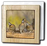 3dRose Danita Delimont - Birds - Northern Bobwhite Quail covey bird, south Texas, USA - US44 LDI1002 - Larry Ditto - 6 inch tile napkin holder (nh_147092_1)