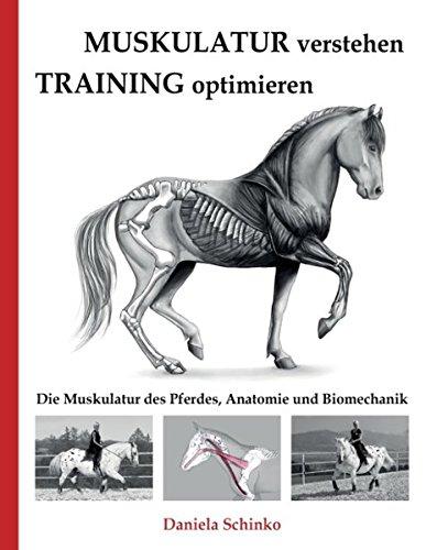 Muskulatur verstehen - Training optimieren: Die Muskulatur des ...