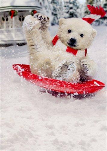 Sledding Bears (Polar Bear Snow Slide - Avanti Funny Box of 10 Christmas Cards)