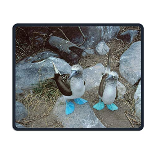 Animal Blue Footed Booby Birds Seabirds Bird Mouse Pad Non-Slip Rubber Mousepad Custom Gaming Rectangle Rug 7.1'X8.7'
