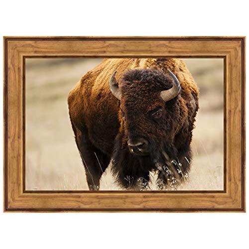 Black Forest Decor Montana Bison Framed Canvas