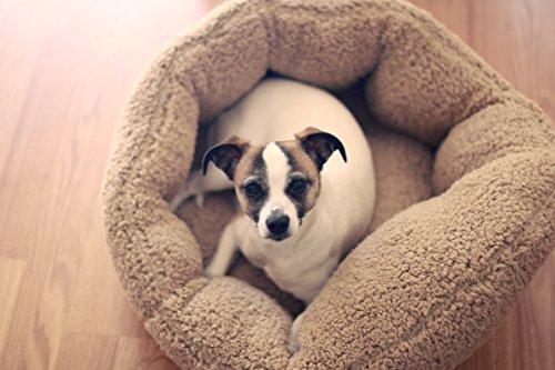 Best Large Dog Beds 12