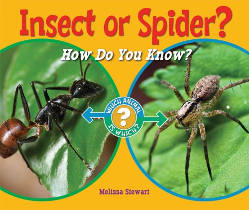 Insect or Spider?: How Do You Know? (Which Animal Is Which?) -