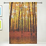 Nature Scene Lake Autumn Trees Forest Sheer Curtain for Living Dining Room Bedroom 55 x 84 Inches Long Orange Window Treatments Rod Pocket Polyester Fabric