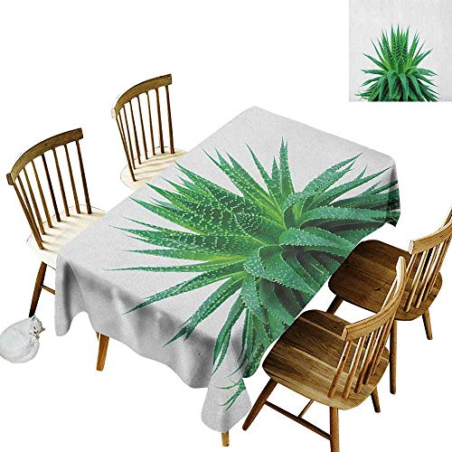 kangkaishi Waterproof Anti-Wrinkle no Pollution Long Tablecloth Medicinal Aloe Vera with Vibrant Colors Indigenous Species Alternative Natural Remedy W14 x L108 Inch Fern Green A Low Vera Mask