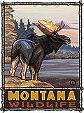 Northwest Art Mall Montana Wildlife Moose Metal Art Print by Paul A. Lanquist (9' x 12')