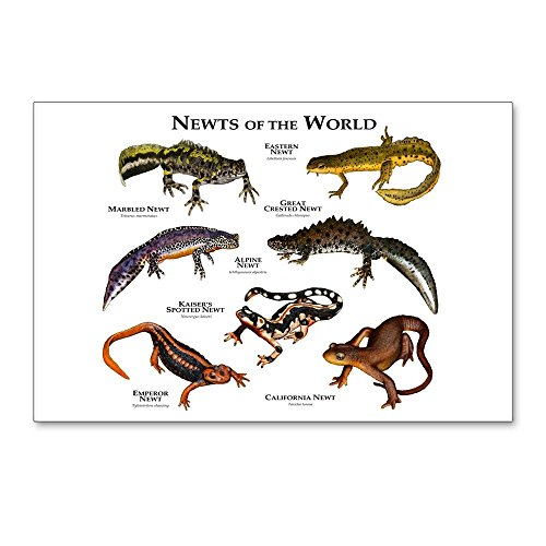 CafePress - Newts Of The World - Postcards (Package of 8), 6