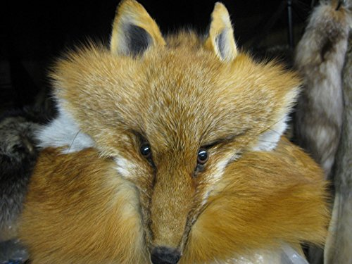 Red Fox Real Fur Hat with Full Face Real Pelt (Handmade) for sale  Delivered anywhere in USA