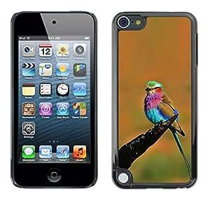 Naranja vibrante colorido pájaro del verano- Metal de aluminio y de plástico duro Caja del teléfono - Negro - Apple iPod Touch 5