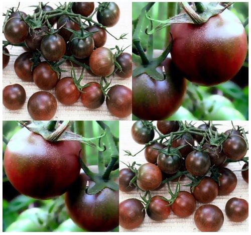 20 BLACK CHERRY Tomato seeds HEIRLOOM RARE SWEET ~vigorous grower dark red (Heirloom Cherry Tomato Seeds)