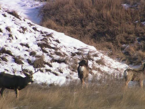White River, South Dakota - Deer