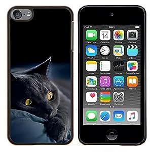 EJOOY---Cubierta de la caja de protección para la piel dura ** Apple iPod Touch 6 6th Touch6 ** --Siamés Gatito lindo de la pata suave peludo Bestia