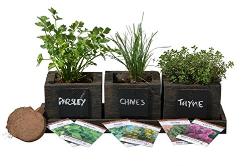 Herb Garden Plant Light Box