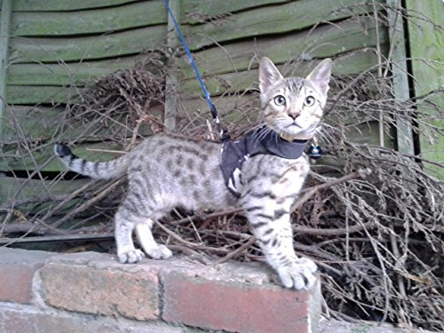 Mynwood Cat Jacket/Harness Arctic Combat Kitten up to 8month ...
