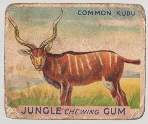 1933 World Wide Gum Jungle Gum (R78) (Non-Sports) Card# 12 Common Kudu Fair Condition