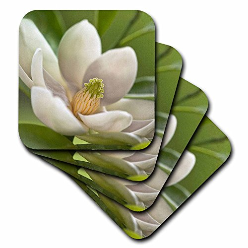 3dRose cst_83298_4 Magnolia Tree Flower Blossom NA01 AJE0189 Adam Jones Ceramic Tile Coasters, Set of 8