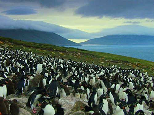 Falkland Islands: Penguin Paradise