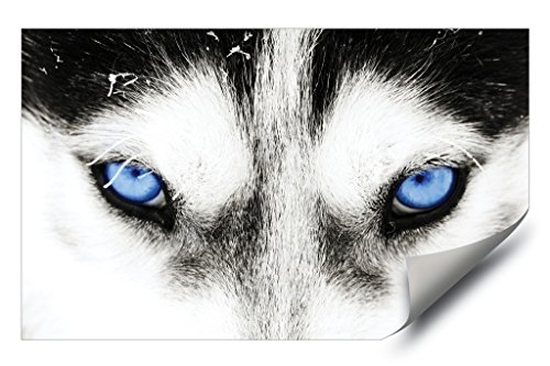 Blue Eyed Husky Dog Grey Wolf HD Vinyl Wall Art Poster Decal Sticker Picture (27