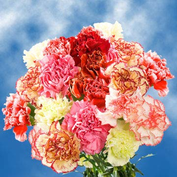 GlobalRose 200 Fresh Cut Novelty Color Carnations - Fresh Flowers Wholesale Express Delivery by GlobalRose (Image #4)