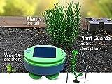 Tertill Garden Weeding Robot - Prevents Weeds in