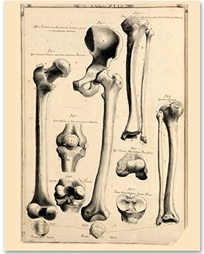 Hip and Leg Bones - 11x14 Unframed Art Print - Makes a Great Gift Under $15 for Medical and Nursing Students