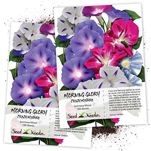 "Seed Needs, Morning Glory""Crazy Mixture"" (Ipomoea Mixture) Twin Pack of 150 Seeds Each"