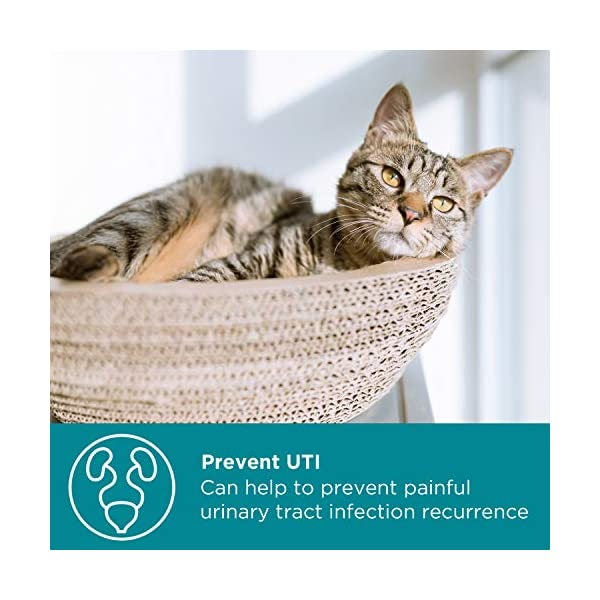 maxxicat – maxxiUtract Urinary and Bladder Supplement for Cats – Helps Prevent UTI Recurrence, Support Feline Bladder Control and Urinary Tract System Health – Cranberry Formula Powder 2.1 oz 2