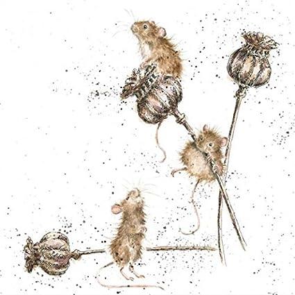 Awakening by Wrendale Designs Hedgehog Blank Birthday Greeting Card