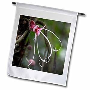 Danita Delimont–flores–Ecuador, Orellana, Napo River. Wild árbol de planta de cacao, herrania–banderas
