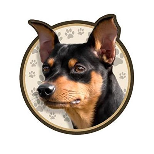 Miniature Pinscher Dog 3